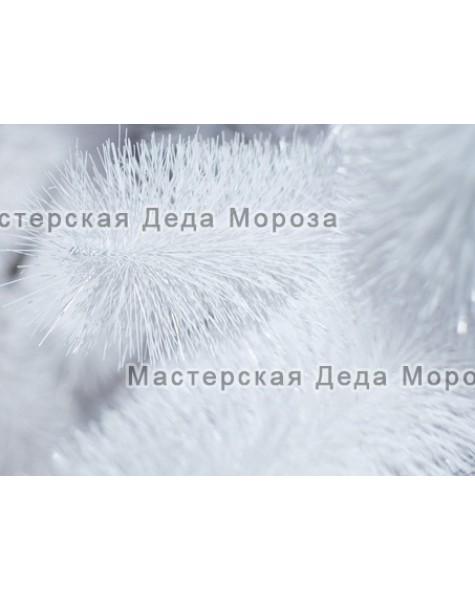 Ель Рублевская - Белая (от 3м до 8м) леска