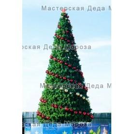 Сосна каркасная Уральская (от 4м до 45м) леска