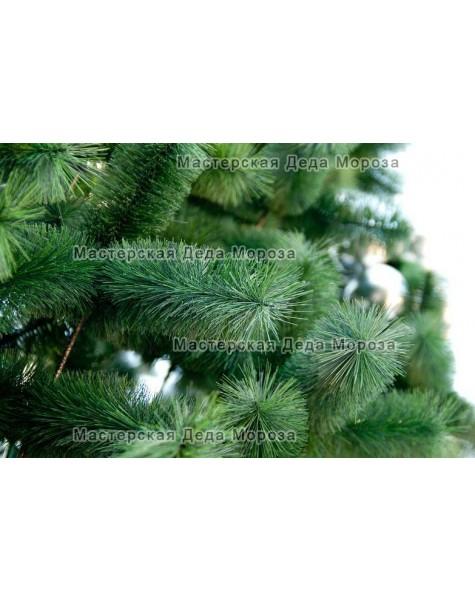 Сосна каркасная Уральская (от 3м до 45м) леска