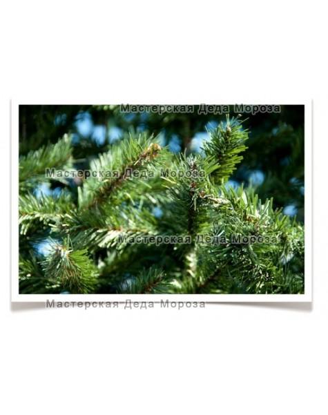 Ель Рублевская - Зелёная (от 3м до 8м) плёнка